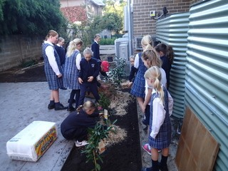 Student planting fruit and vegetable plants.
